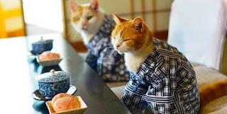 Gambar Wallpaper Kucing Lucu Banget 200029