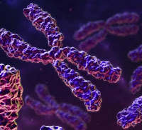 [Image: cromossomos.jpg]