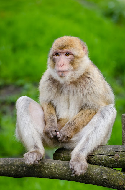 white Monkey sitting on tree branch image