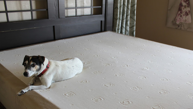 new bed mascot