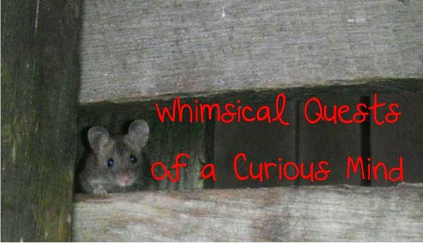 Whimsical Quests of a Curious Mind