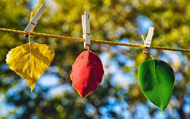 Groen, rood en geel herfstblad aan de waslijn