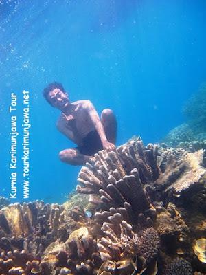 foto terbagus snorkeling di karimunjawa