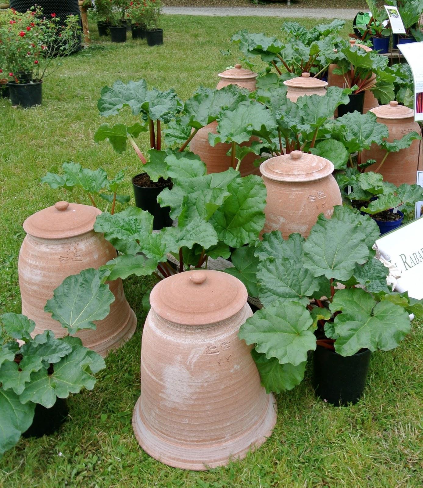 Ultimissime dall'orto: Â«Giardinaggio e tutela ambientale sono ...