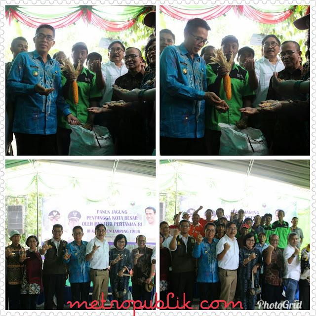 Pesta Panen Jagung Di Lampung Timur Di Hadiri Kementerian Pertanian
