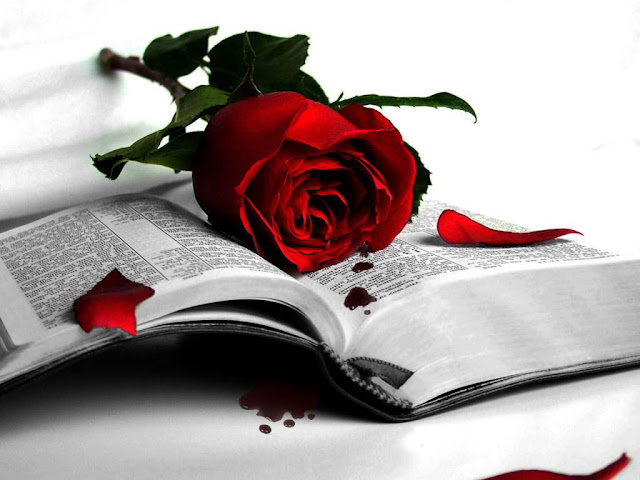 rose day pics for facebook