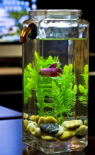 Model Aquarium Ikan Hias Yang Simple Sederhana Unik Dan