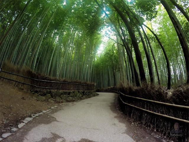 Papringan Arashiyama