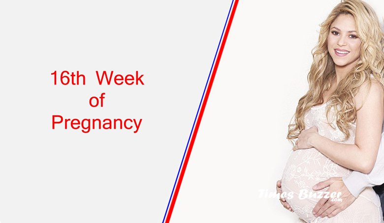 16th Week of Pregnancy