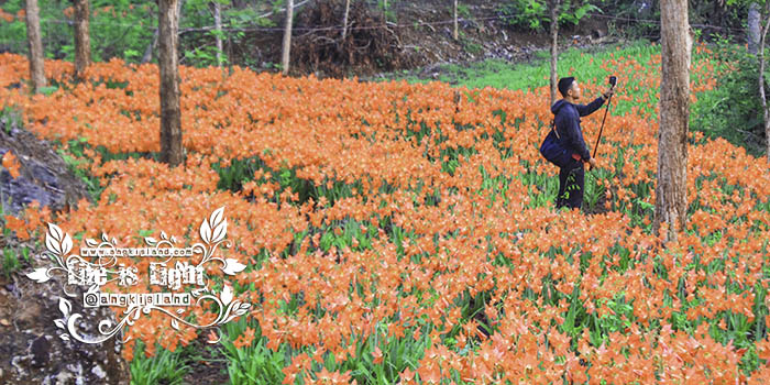 bunga berambangan patuk