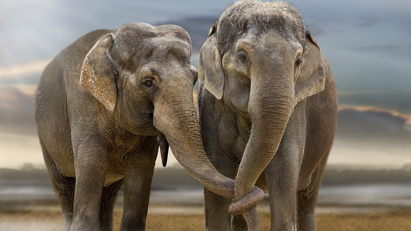 Animals Wallpapers HD: Elephant Wallpapers HD