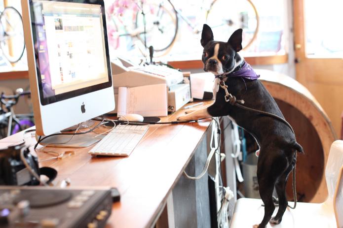 surveiller son chien gr ce skype woof mag 39 le blog. Black Bedroom Furniture Sets. Home Design Ideas