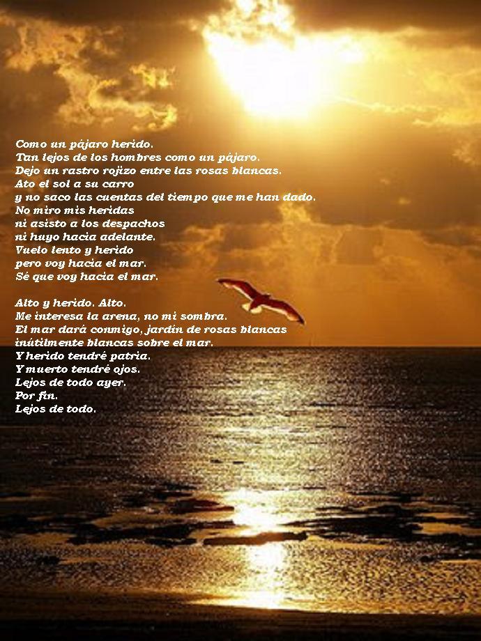 Poesia Como Un Pájaro Herido