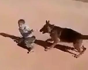 Le Sueltan el Perro al Niño