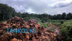 Komposting limbah padat tandan kosong kelapa sawit dan aplikasi limbah cair kelapa sawit