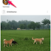 Cara Menggunakan Questions Sticker Di Instagram Story untuk Menambah Pertanyaan Stiker Ke Kisah Instagram Anda