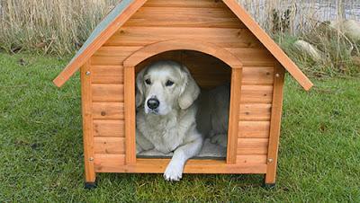 come-costruire-una-cuccia-per-cani