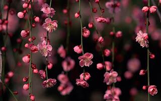 Amazing spring flower desktop best wallpapers