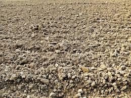 Tanah Sebagai Sumber Nutrisi