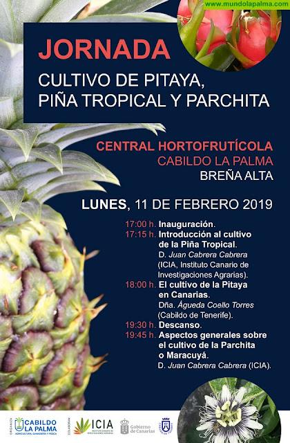 El Cabildo dedicada una jornada formativa a los cultivos subtropicales