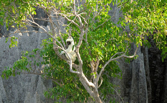 Xvlor.com Tsingy de Bemaraha National Park