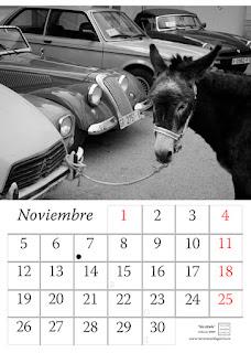 burro,calendario,2018,muestra,animales,pared,diseño,foto
