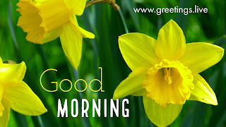 Fresh morning Flowers yellow in colour greetings live