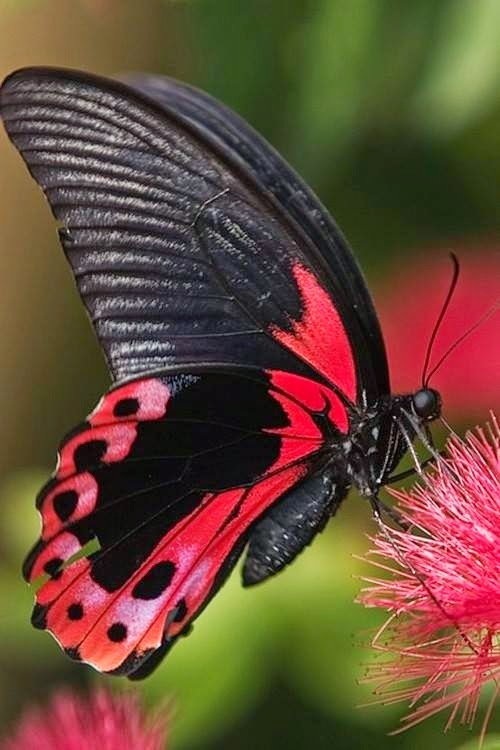 Lovable Images: Butterflies Mobile Background Pictures ...