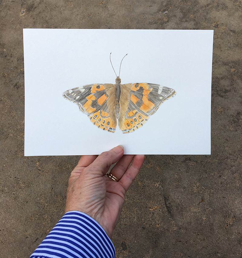 Painted Lady Butterfly Watercolor Painting by Kathleen Maunder