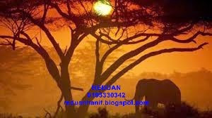 Cita-cita ingin ke Safari Afrika Selatan menjadi kenyataan dengan AIA Public Takaful