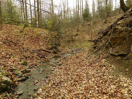 Potok spływający z przełęczy między Kiczerką i Rosochą.