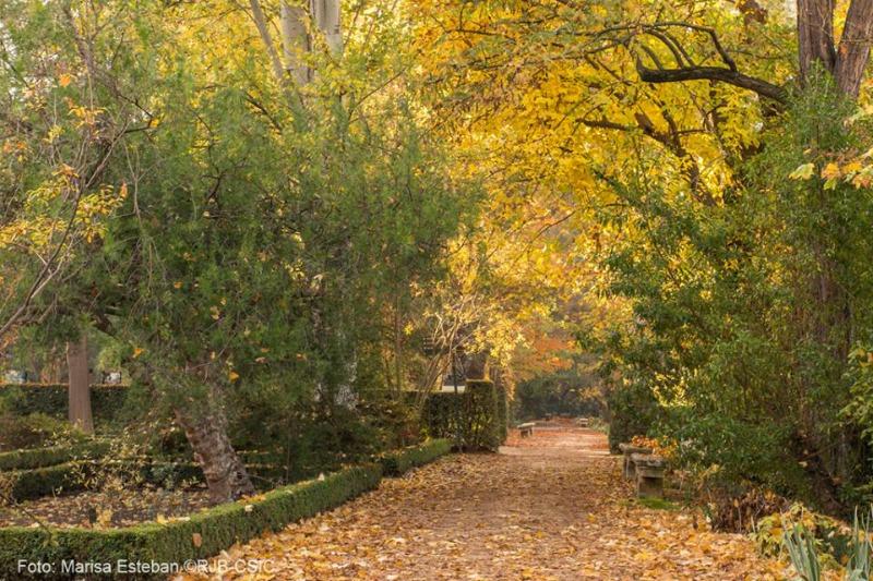 Senderos de oto o en el real jard n bot nico de madrid for Jardin botanico madrid