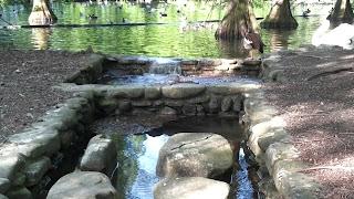 Parco Faenza sentiero con sassi