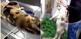 Καρδίτσα: 1 χρόνο φυλακή και 5.000 ευρώ στο 60χρονο που σούβλισε γάτα με ψαροντούφεκο