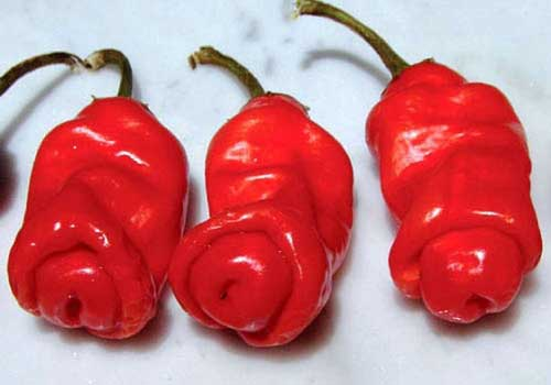 Peter Popper Red Hot Peppers