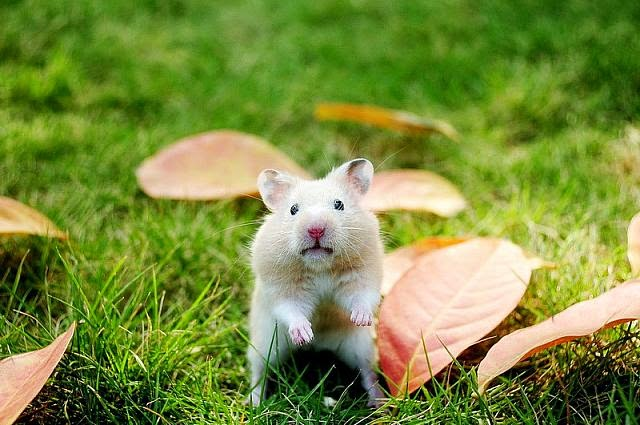 Cute and funny pictures of hamsters 2-7