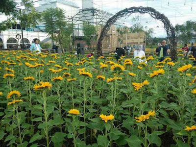 Harga Tiket Masuk Kebun Bunga Matahari Sky Garden Paris Van Java Bandung