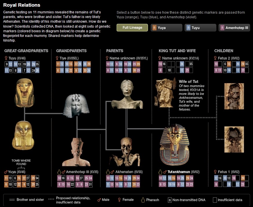 http://ngm.nationalgeographic.com/2010/09/tut-dna/tut-family-tree