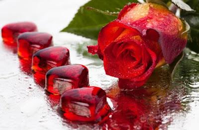 Rosas hermosas para fondos de pantalla