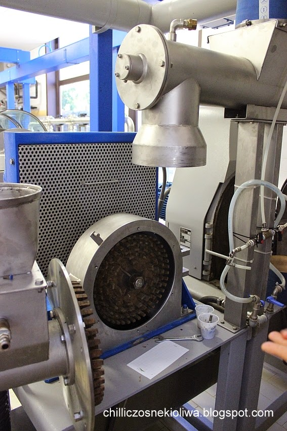 produkcja oliwy z oliwek etapy