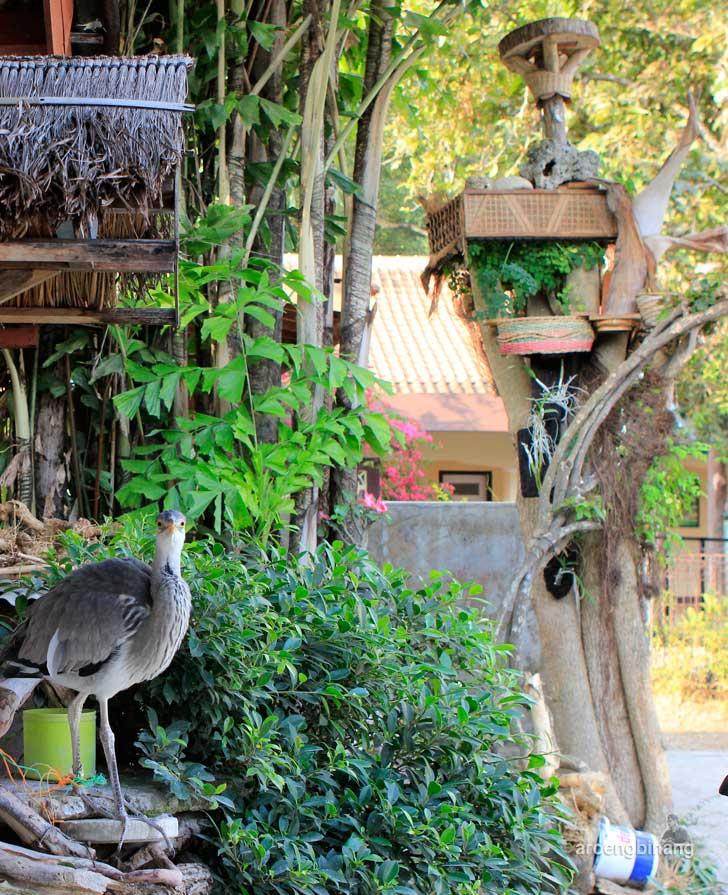 [CoC Regional: Lokasi Wisata] Pemandian Tirta Husada Kalibacin Banyumas