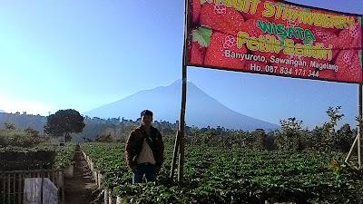 Kebun Stroberi di Magelang Ketep Pass