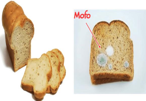 Mofou
