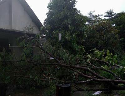 Hujan Lebat, Pohon Tumbang Timpa SMKN Gudo