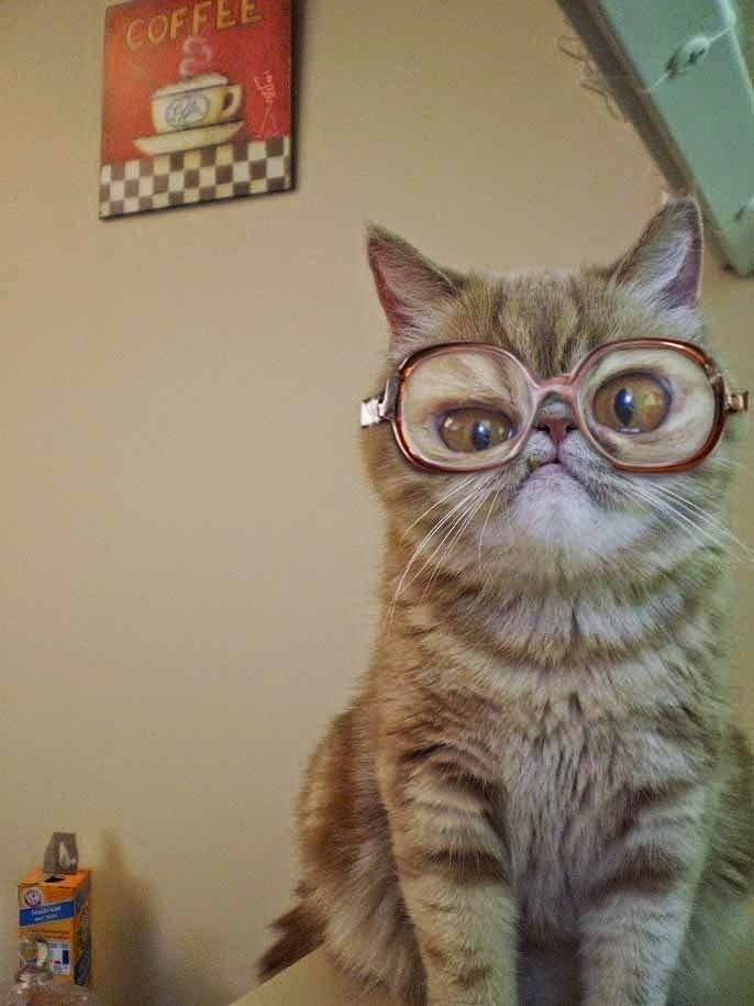 Funny Cat Wearing Glasses Joke Picture Photo