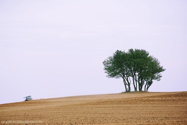 minimalizm, fotografia minimalistyczna, minimalistic photography, samotne drzewo