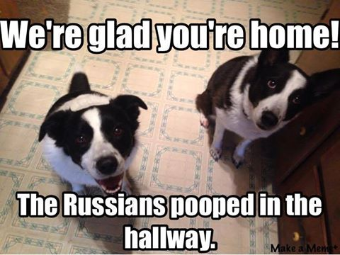 Image result for blame the russians
