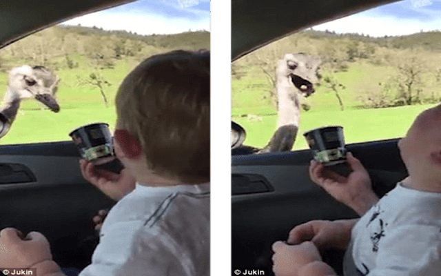 An Ostrich Stuck Its Head In The Window And This Baby's Reaction Was Hysterical