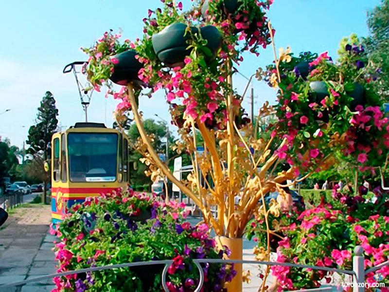 Золотое дерево любви в Евпатории