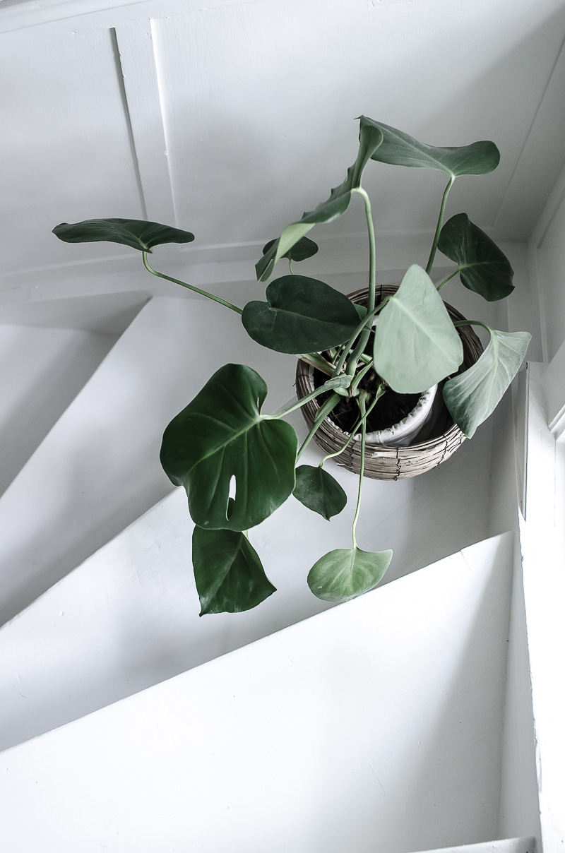 Renovering av trapp, vit trapp, monstera